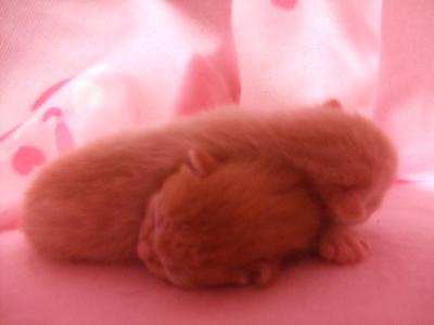 シーナと赤ちゃん 5