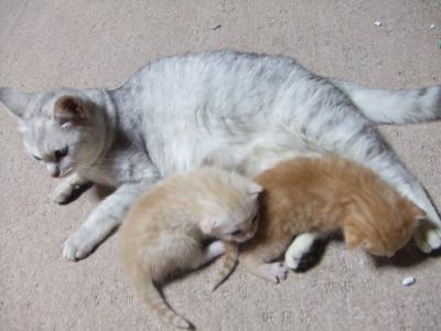 シーナと赤ちゃん 7