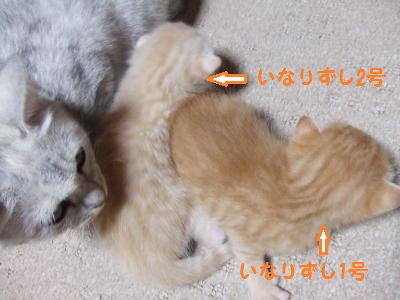 シーナと赤ちゃん 8