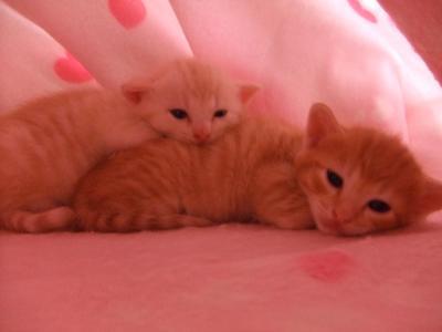 シーナと赤ちゃん 9