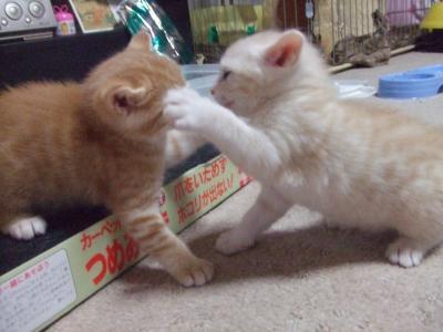 シーナと子猫 1