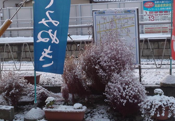 雪のほうき草