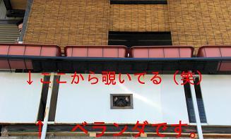 CIMG0666.jpg