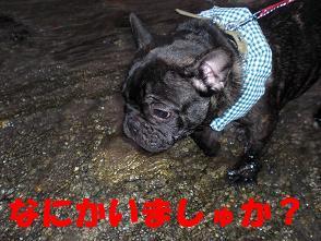 CIMG0832.jpg
