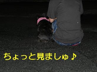 DSCN0912.jpg