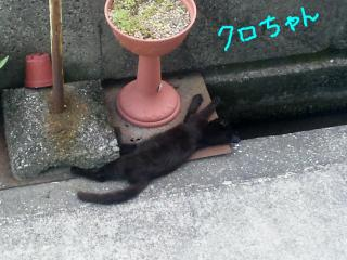 SH388732-kuro.jpg