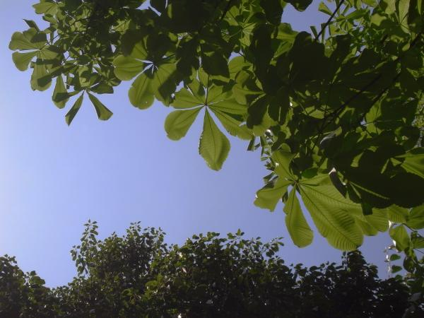 緑と青_convert_20110509231545
