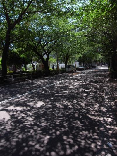 夏の日差し_convert_20110710194043