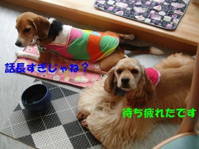 CIMG4484_sh01.jpg