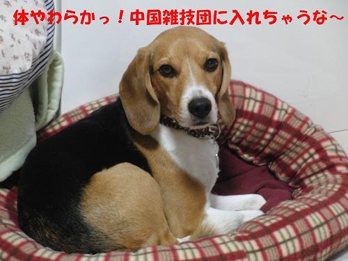 CIMG4838_sh01.jpg