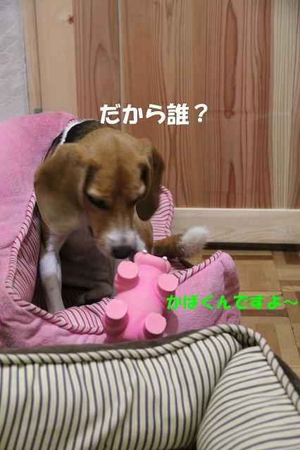 IMG_4382_sh01.jpg