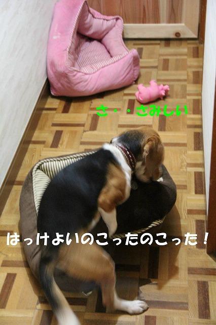 IMG_4386_sh01.jpg
