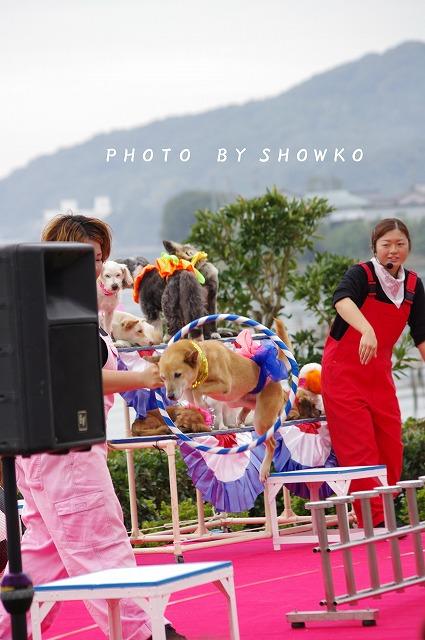 wakuguri_sh01.jpg