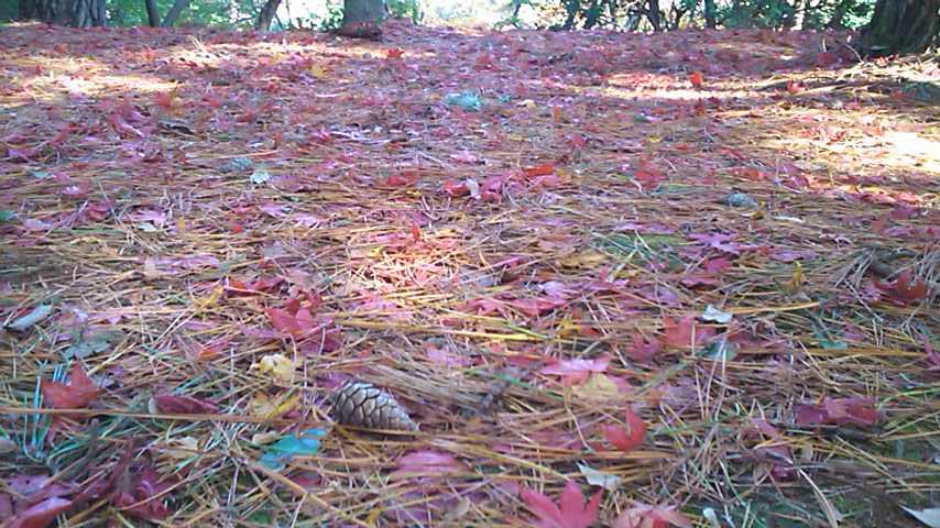 13紅葉のじゅうたん