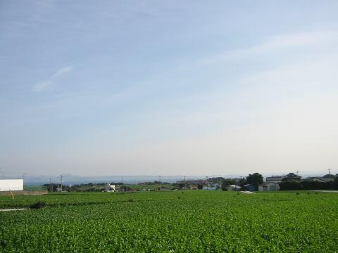 大根畑と房総半島