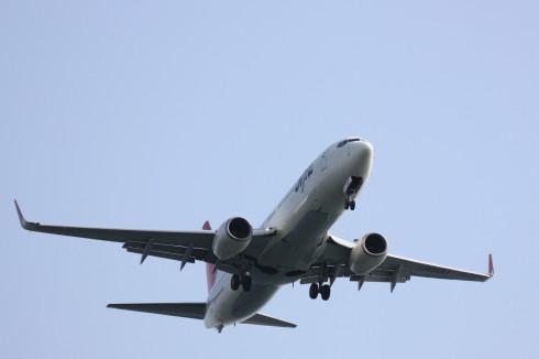 JAL B737-800.jpg