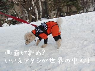 お散歩0208