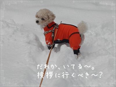 お散歩40310