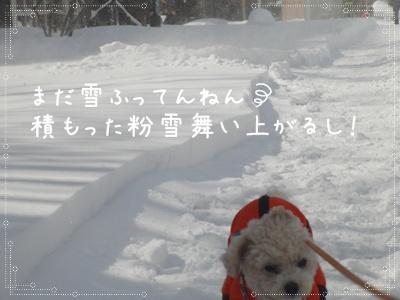 お散歩20310