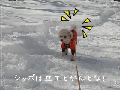 お散歩10310