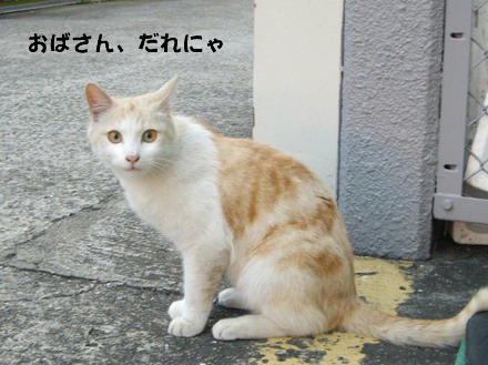 かいさ猫2