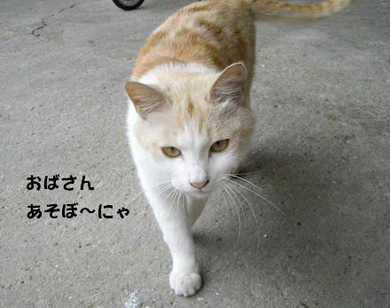 かいさ猫1