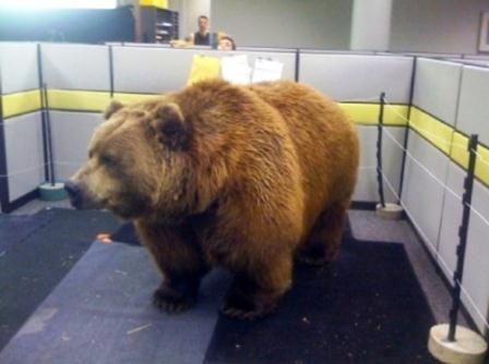 office-cubicle-bear.jpg