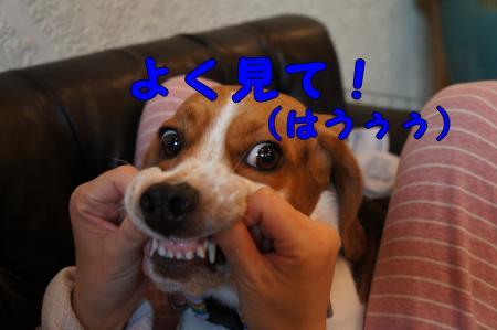 DSC00657_convert_20130123224232.jpg