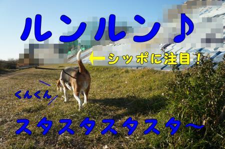 DSC01047_convert_20130128210144.jpg