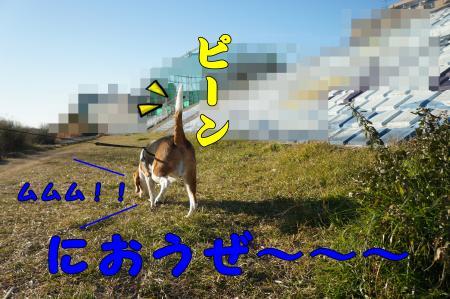 DSC01048_convert_20130128210305.jpg