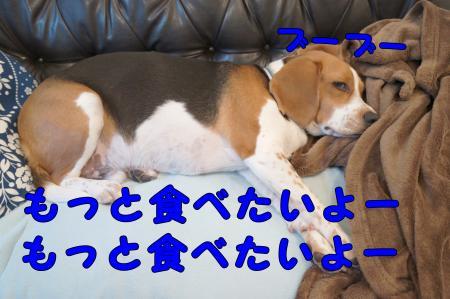 DSC01420_convert_20130218214230.jpg