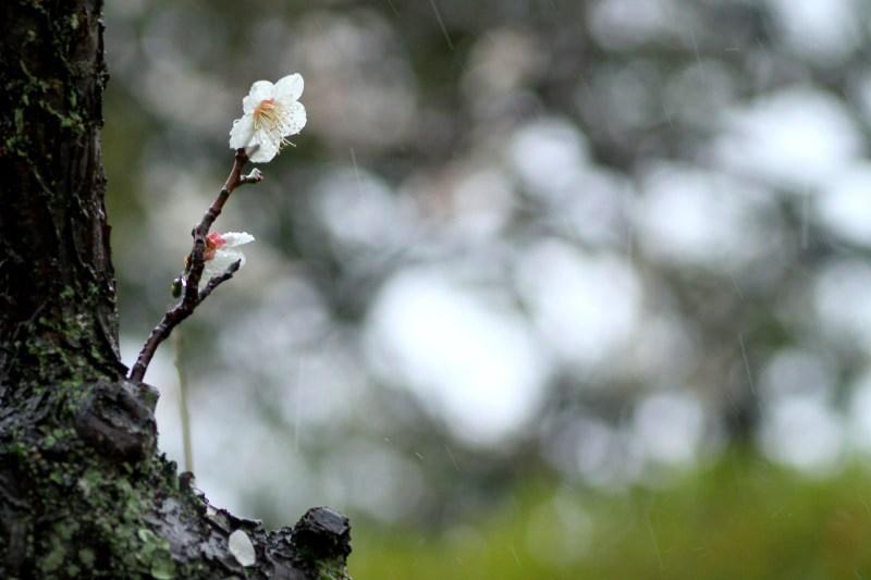 01-20120331_0061.jpg
