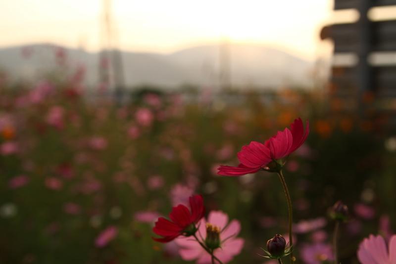 夕暮れ20111010_0501