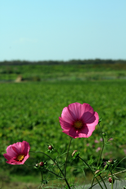 新庄20111016_0108