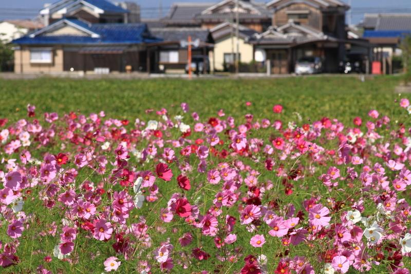 新庄20111016_0077