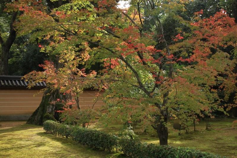 金閣寺20111103_0046
