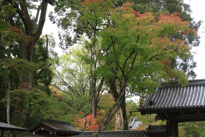 金閣寺20111103_0042