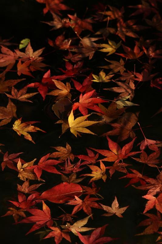 20111120_0453.jpg