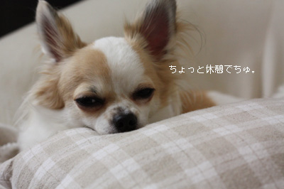 IMG_2594・2 コピー