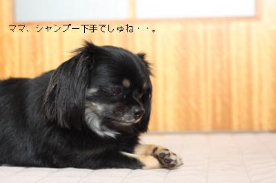 IMG_2829・2 コピー