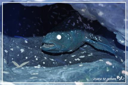 アクアマリン福島