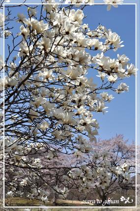 simogoumachi4_14.jpg