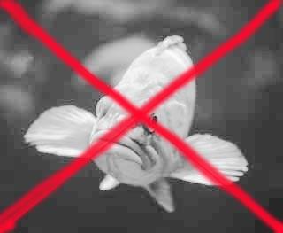 no-fis_20111225205148.jpg