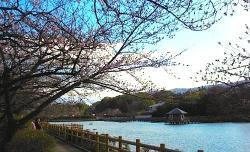 2012.4.1ダムオケ道中、八条ケ池6