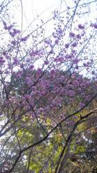 2012.4.1ダムオケ道中、八条ケ池17