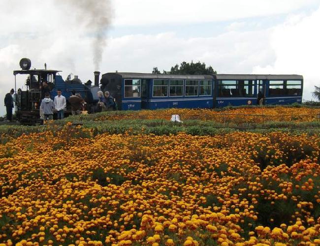 105 トイトレイン花畑.JPG