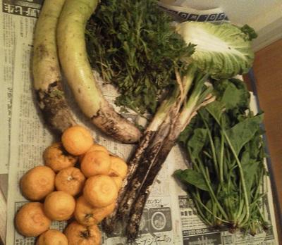 20131221野菜