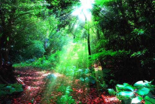 森の中の陽射し