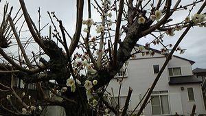 春のきざし1