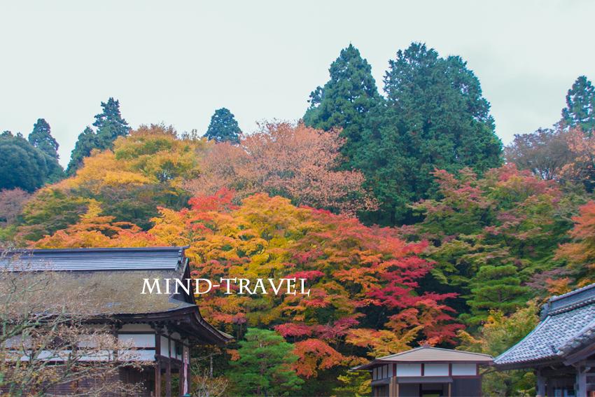 百済寺(滋賀) 紅葉